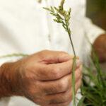 Man touching a plant