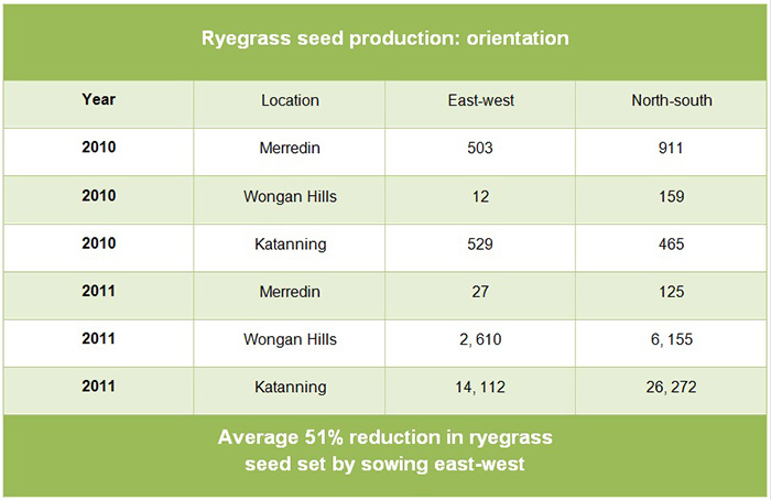 Ryegrass seed production table