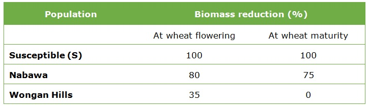 Table population and biomass reduction of flowering wheat