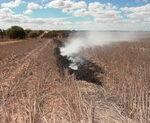 Windrow burning