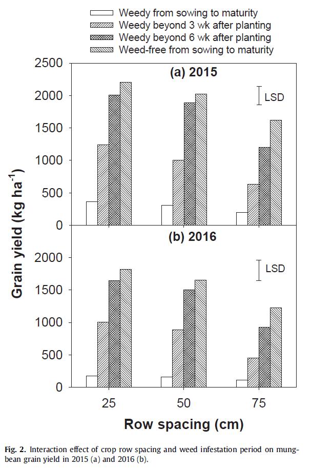 mungbean-row-space-yield