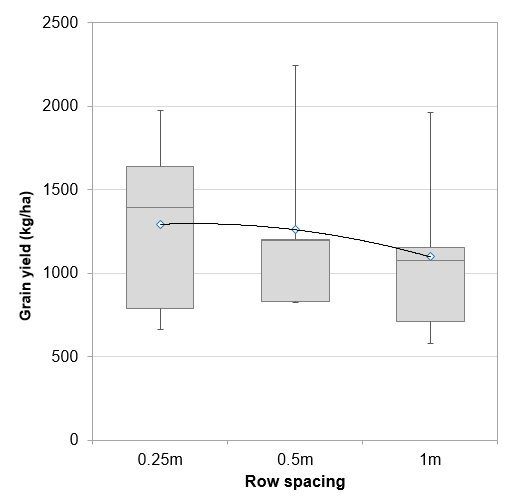 mungbean-row-spacing-kerry-mac-research