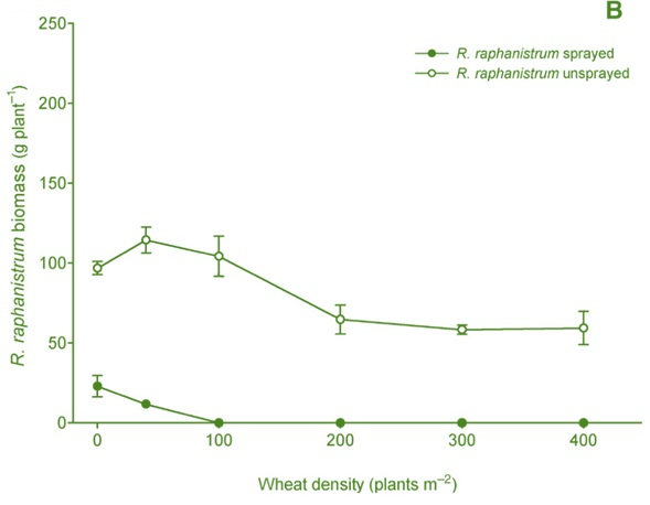 Wheat density vs R. raphanistrum biomass graph