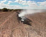 Windrow burning
