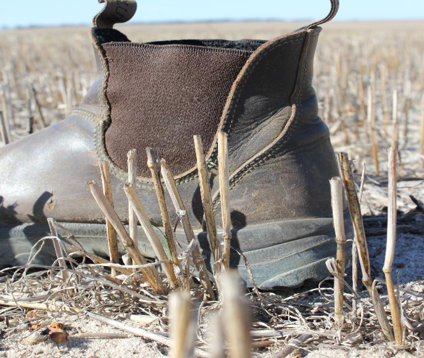 Boot and stubble