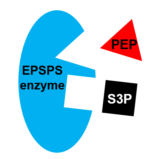 1 epsps