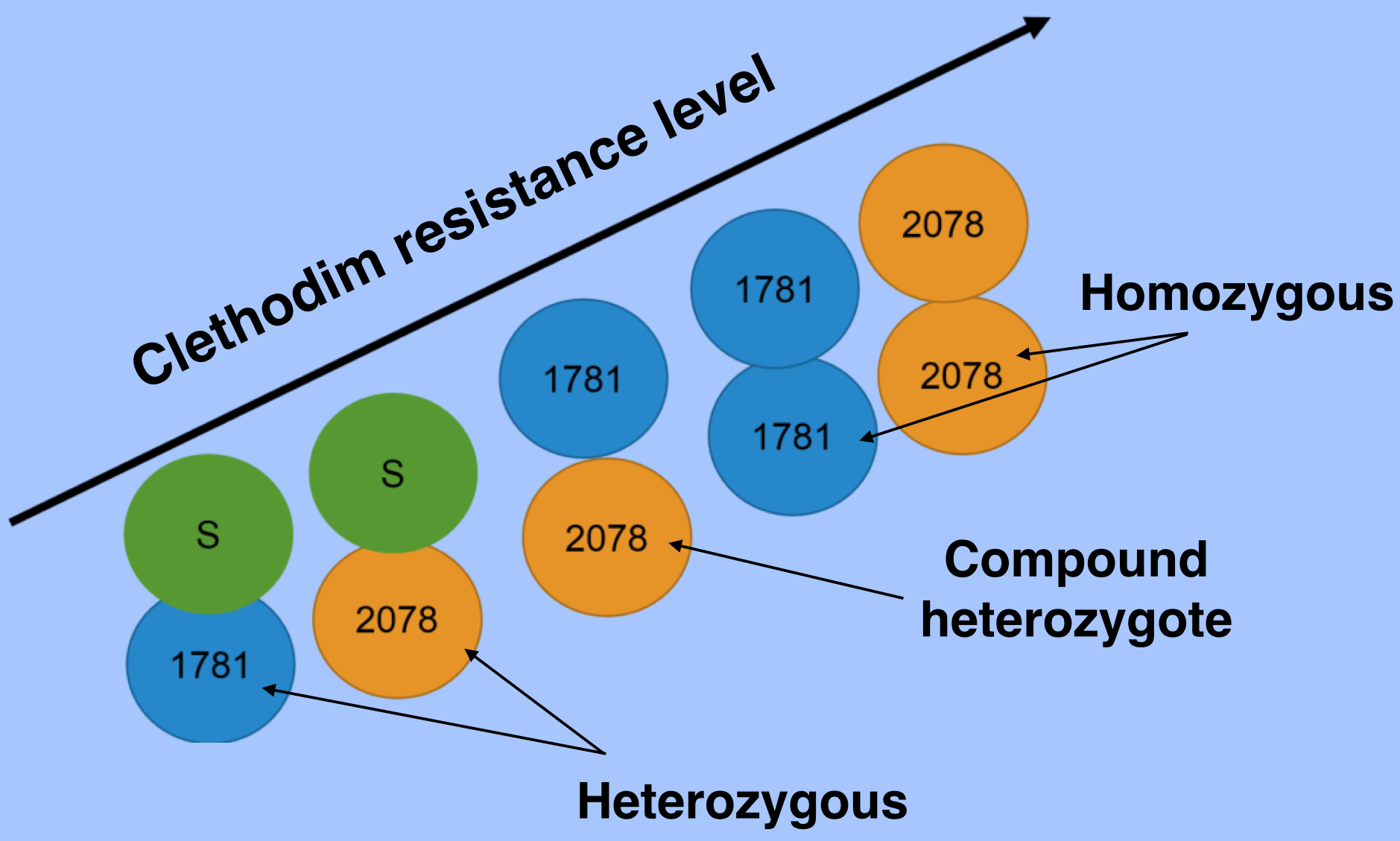1781 & 2078 clethodim R level with labels