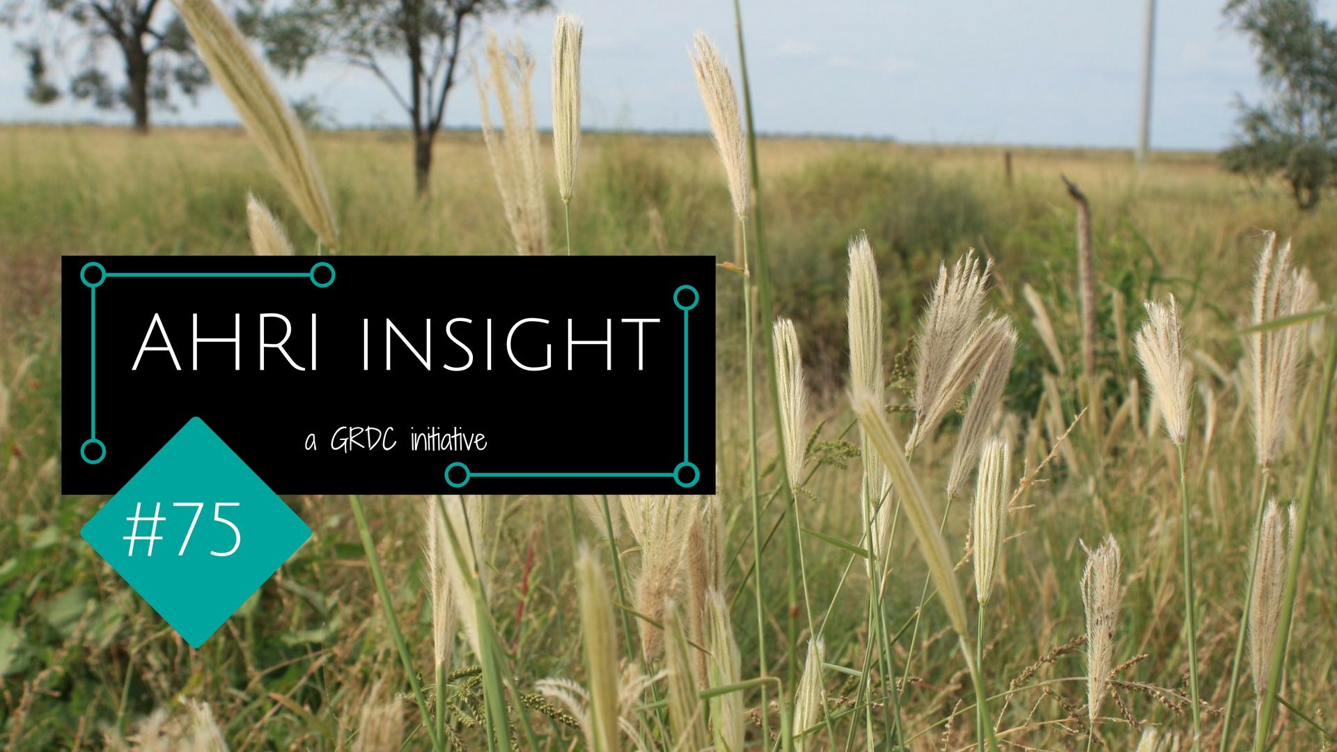 AHRI Insight #75 - Feathertop Rhodes