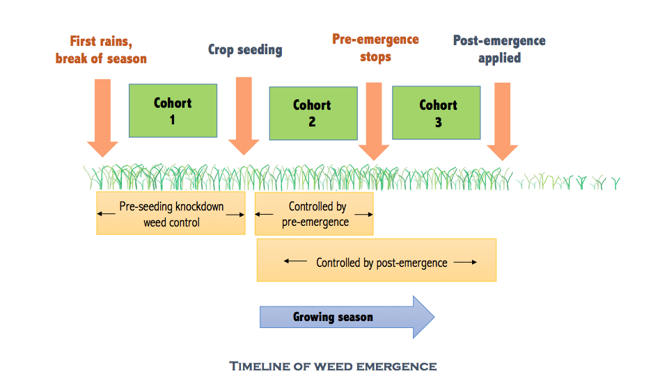 weed emergence, pre-em, post-em